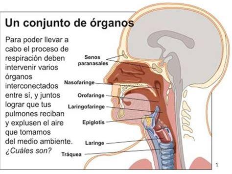 Anatomia e fisiologia humana pdf download — Form c88 download ...
