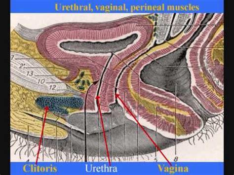 Journal rankings on reproductive medicine jpg 480x360