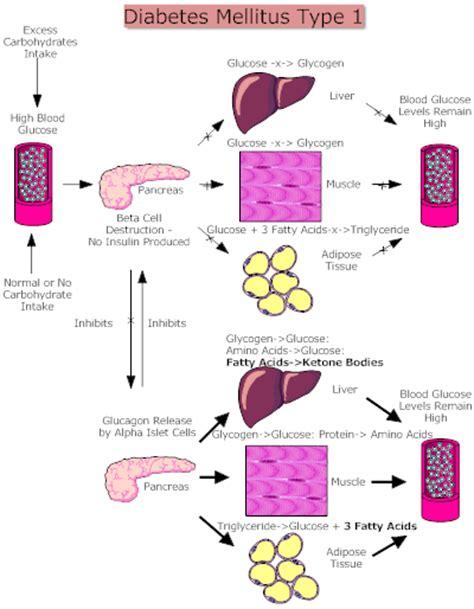 Thesis diabetes type 2 gif 400x514